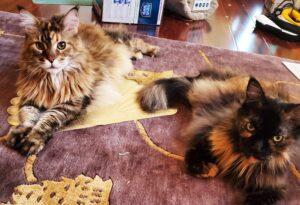 Roxy and Remmy